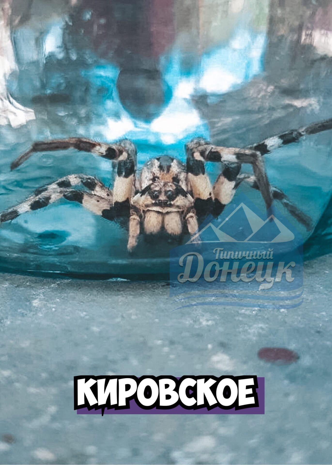 Опасные пауки заполонили Донецк: в соцсетях выложили фото членистоногих