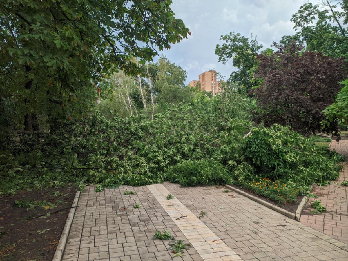 По Донецку прошелся сильный ливень: деревья падали прямо на дорогу, улицы превратились в реки