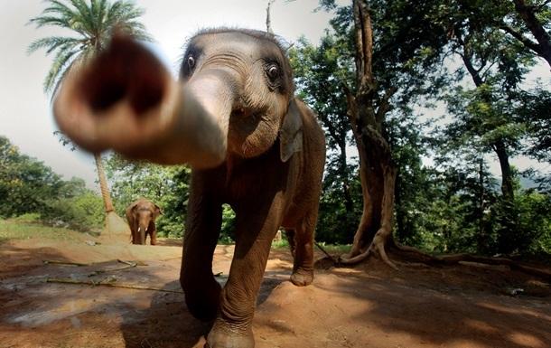 Атака слонов в Индии: дикие животные затоптали насмерть четырех человек