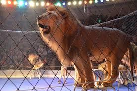 В Перу лев напал на учительницу во время циркового представления