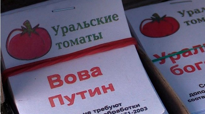 Российский селекционер вывел помидоры сорта «Вова Путин». Томаты вне конкуренции на рынке СНГ
