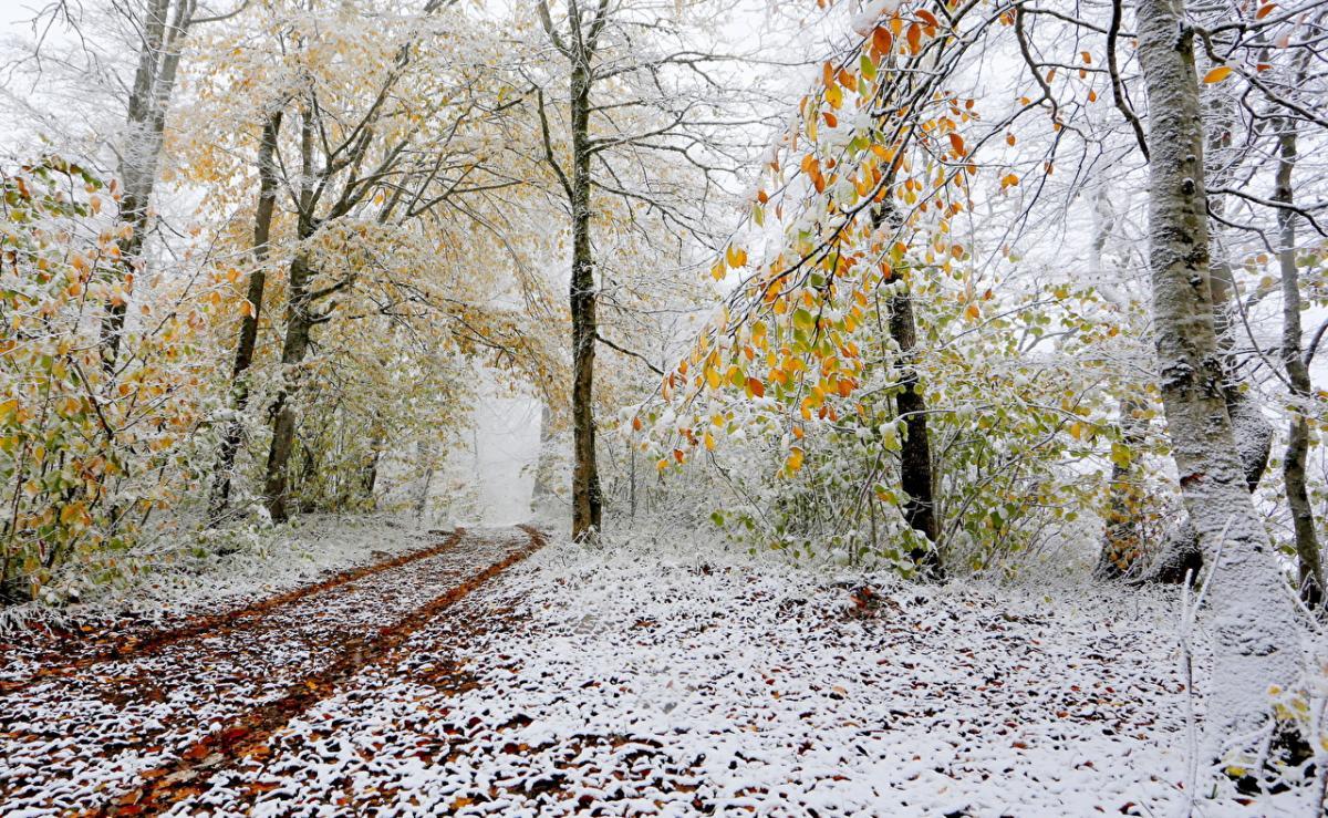 зима, погода в украине, погода в январе, прогноз погоды, февраль, новости украины, синоптики