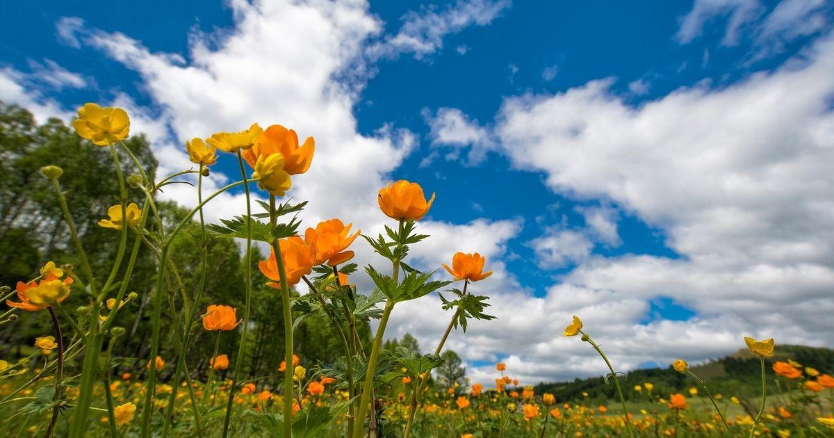 Украинцам предстоит два долгих уикенда в июне: календарь праздников и дней отдыха