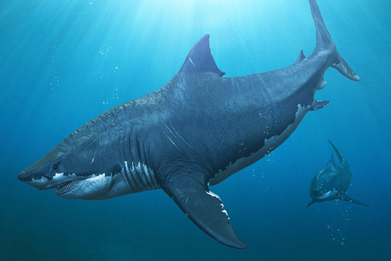 Акула картинки динозавров