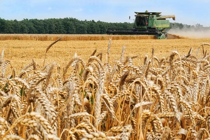 Украинской продукции станет больше на европейских рынках: Европарламент утвердил дополнительные торговые квоты для Украины
