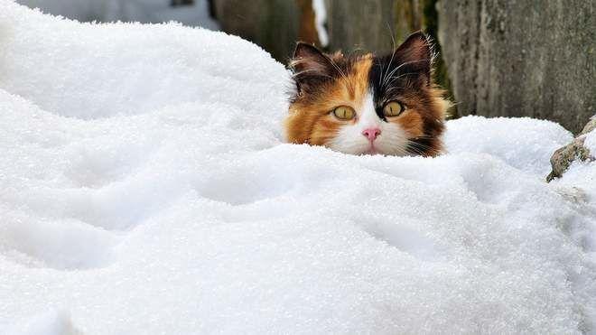Почему погода в Украине дала сбой: синоптики предупредили, что похолодает до минус 30 градусов