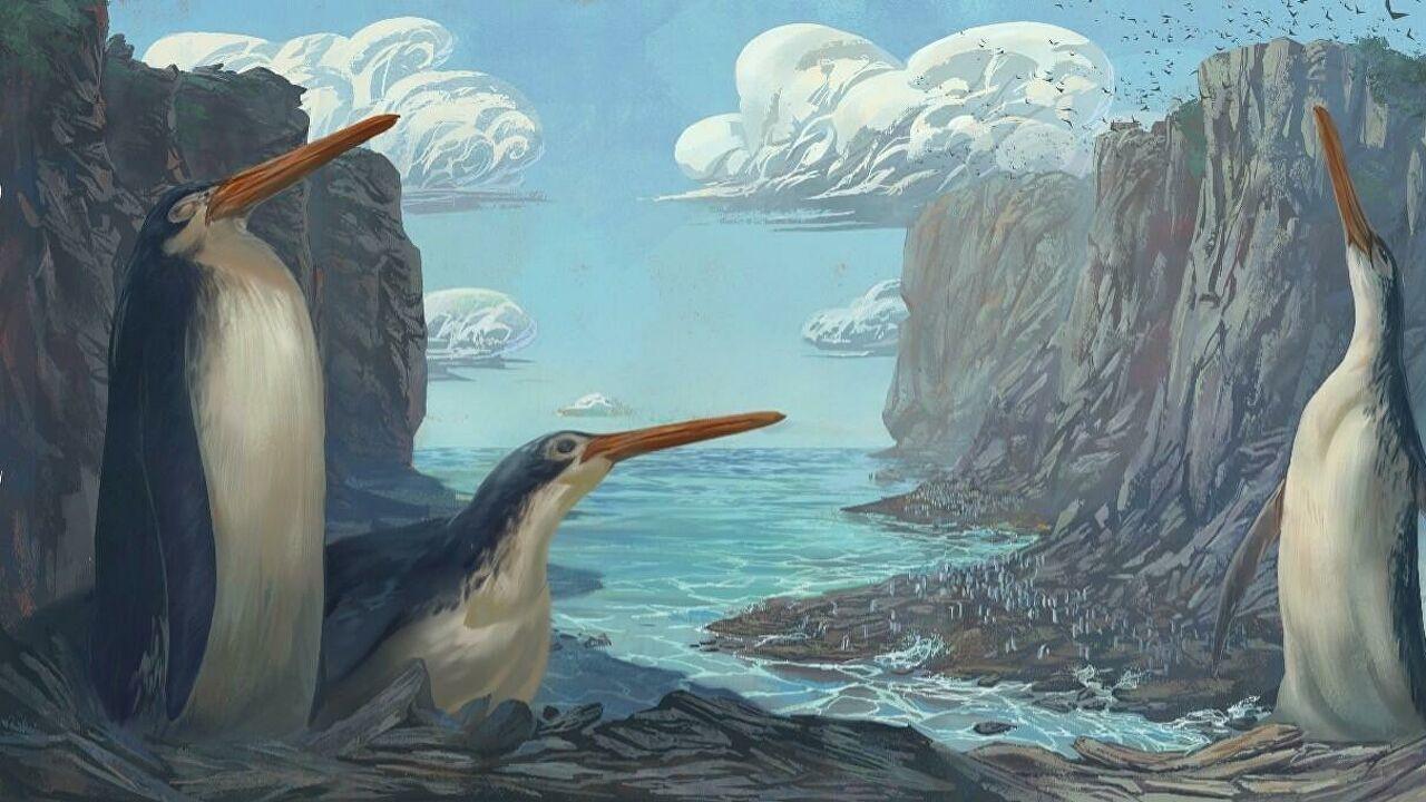 Новозеландскими учеными открыт новый вид доисторических длинноногих пингвинов