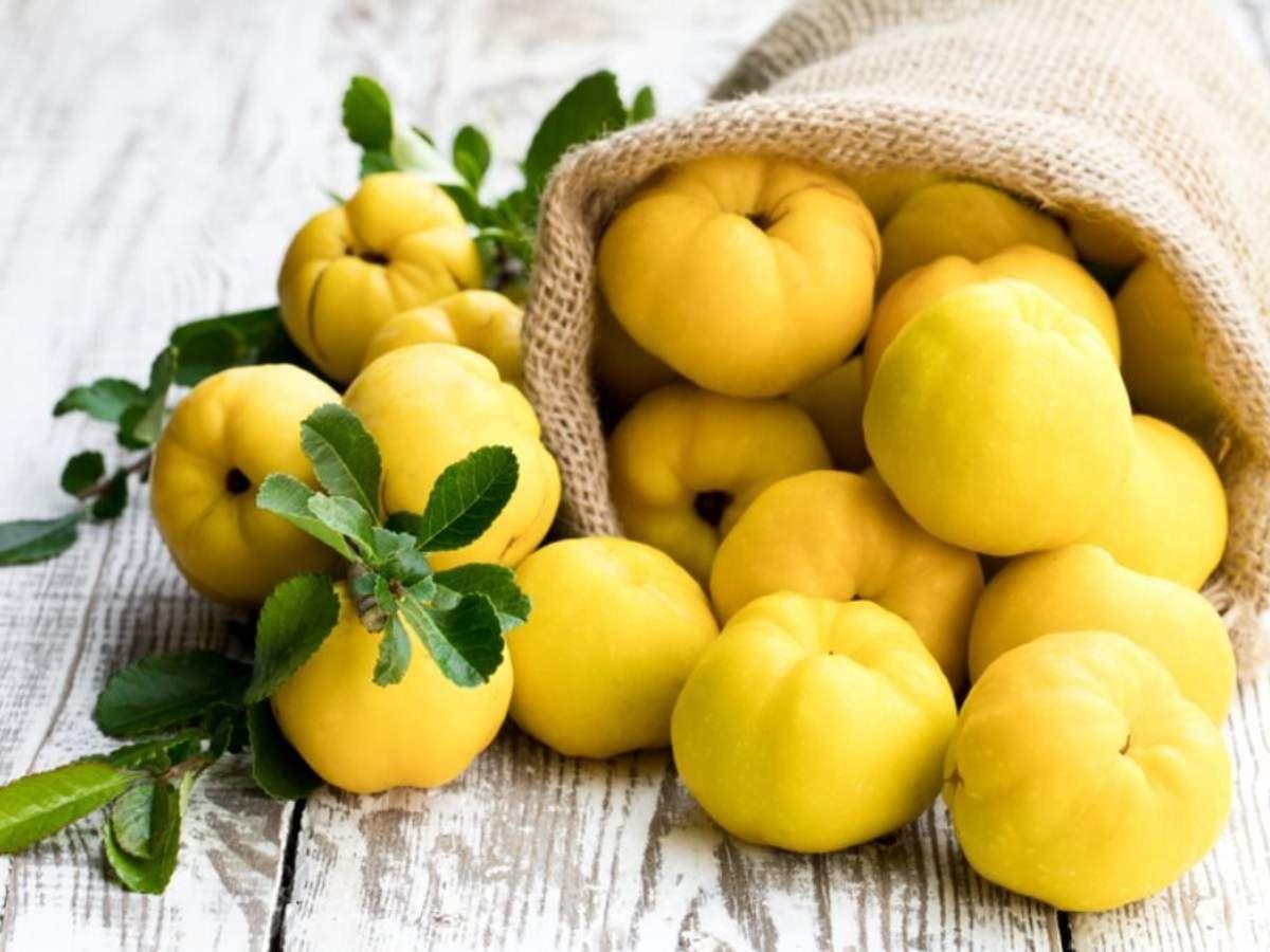 Чем айва опасна для здоровья человека: в каком виде лучше есть фрукт