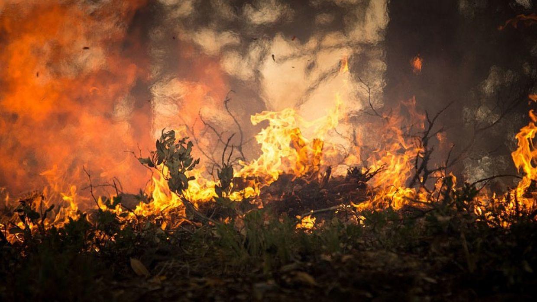 В Канаде снова разгорелись сотни лесных пожаров –  синоптики говорят об ухудшении ситуации