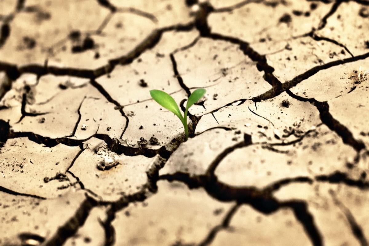 """Природные катаклизмы спровоцируют мировую продуктовую инфляцию """"библейских масштабов"""" – Bloomberg"""