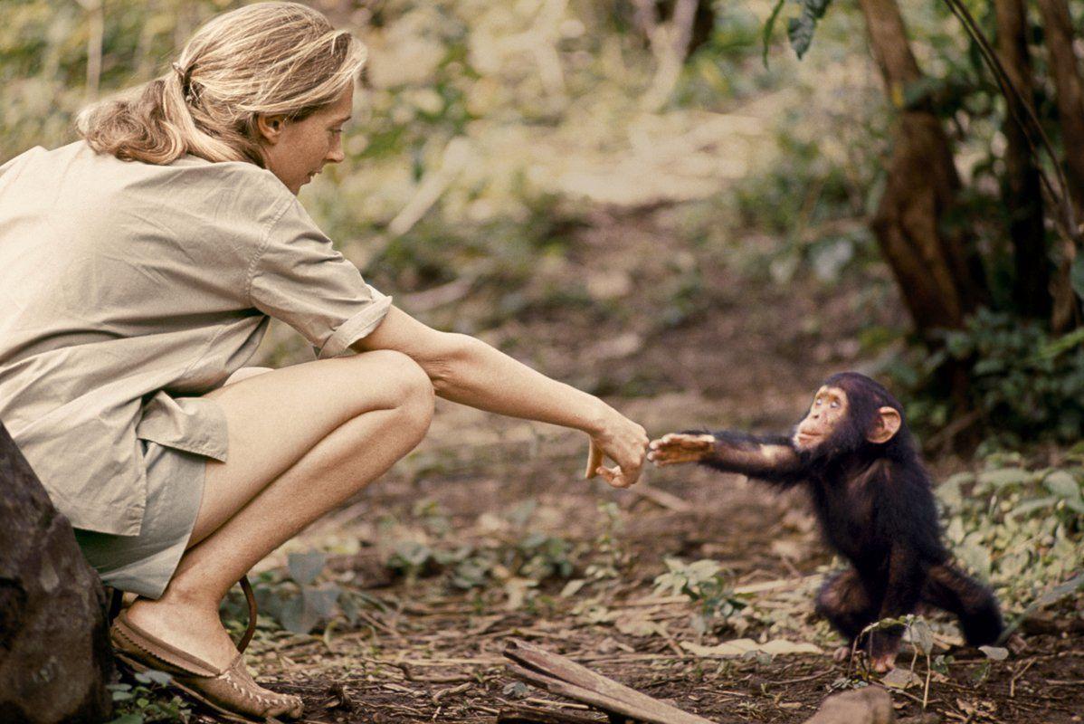 """12-летний мальчик из Анголы является """"плодом любви"""" женщины и шимпанзе: эксперты дали свою оценку 1"""