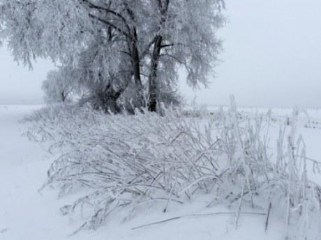 Прогноз погоды, ливни, дожди, жара, мрачно, облачно, туман, снег, дождь, тепло, холодно, синоптик, ледниковый период, Антарктиде, общество, Украина, температура, рекорд