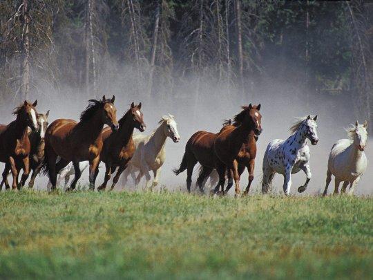 Зверская расправа над украинскими лошадьми в России: здоровых животных сначала усыпили, после чего сожгли
