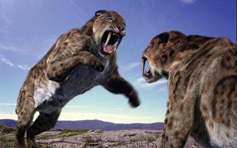 Ученые рассказали, что скрывают останки двух доисторических тигрят, погибших 55000 лет тому назад, - кадры