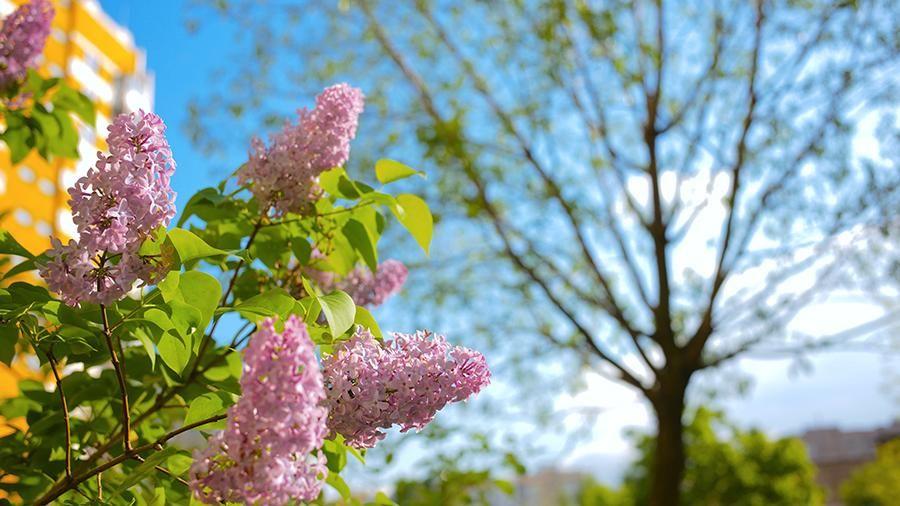 Погода в Украине 16 мая: придет жара до плюс 29 градусов, в каких регионах будет жарче всего