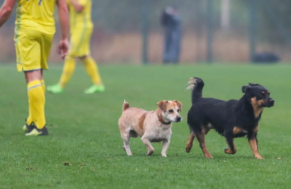 Міжнародний футбольний матч серед паралімпійців в Україні ледь не зірвали тварини