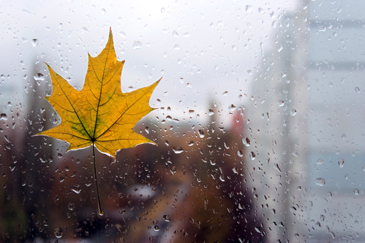 осень, погода, новости украины, наталья диденко, погода в украине, прогноз погоды
