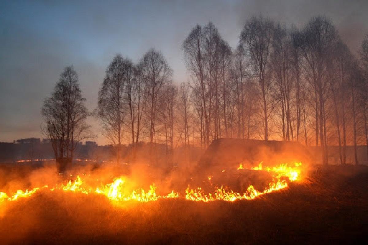 В Кабмине на фоне пожара в Чернобыле ввели новые штрафы за поджог травы: сколько придется заплатить