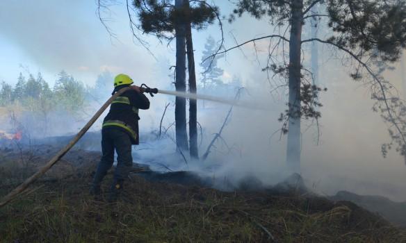 В Днепропетровской области горел военный полигон - кадры