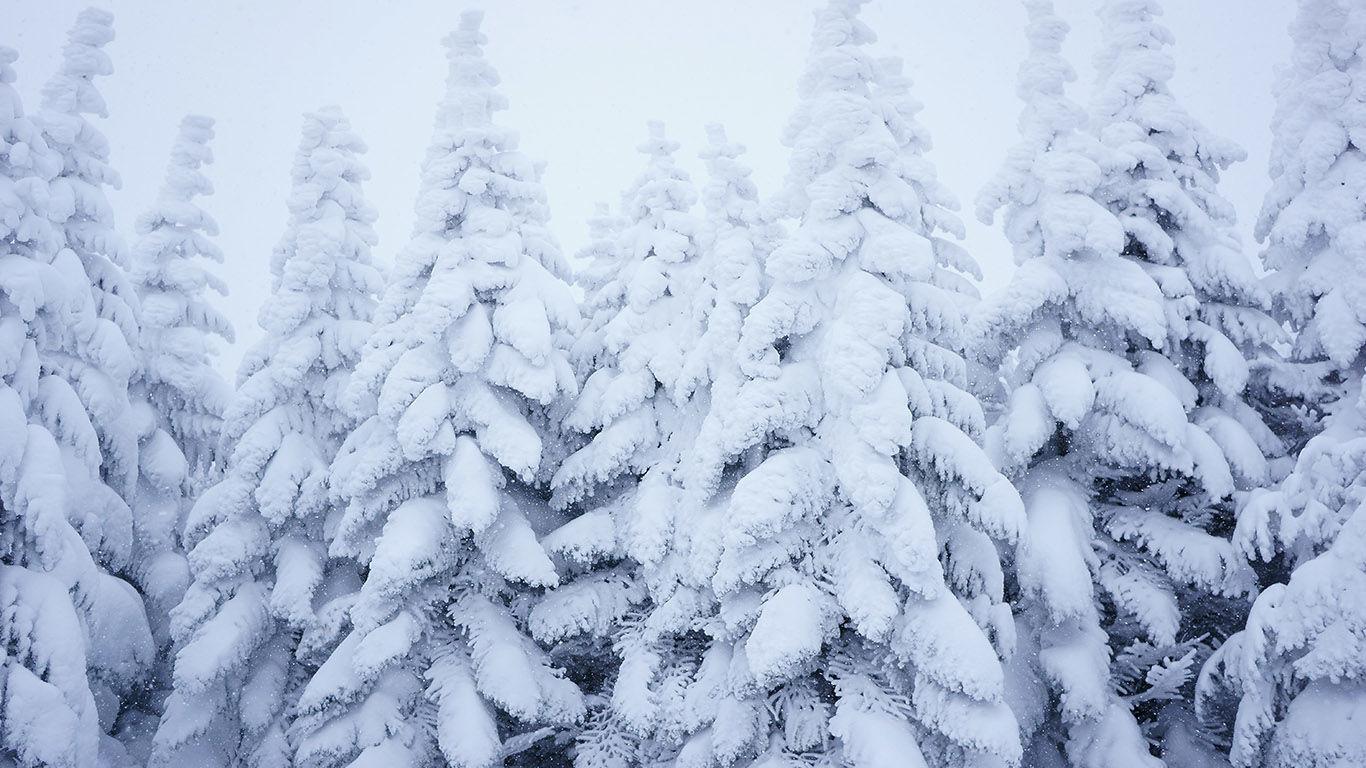 Заснежит и заморозит: синоптики Украины рассказали о переменах климата и погодных условиях на зиму