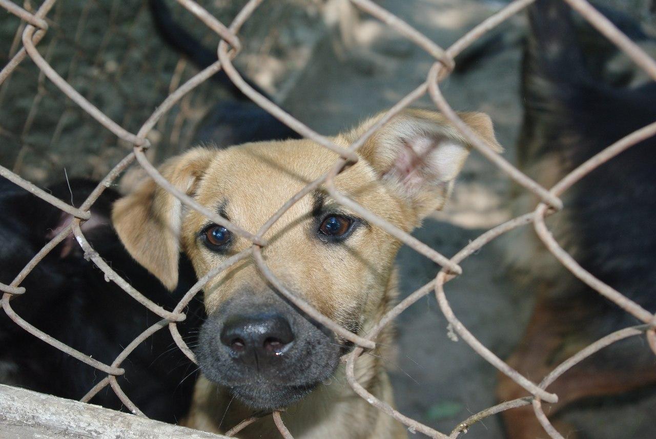 В Горловском приюте для бездомных животных критическая ситуация