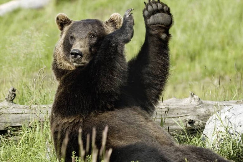 россия, магадан, браконьер, медведь