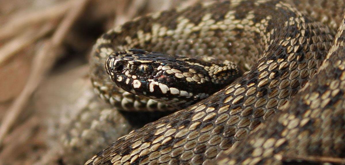 В Полтаве ребенок подвергся нападению змеи — ГСЧС выступило с предупреждением к населению