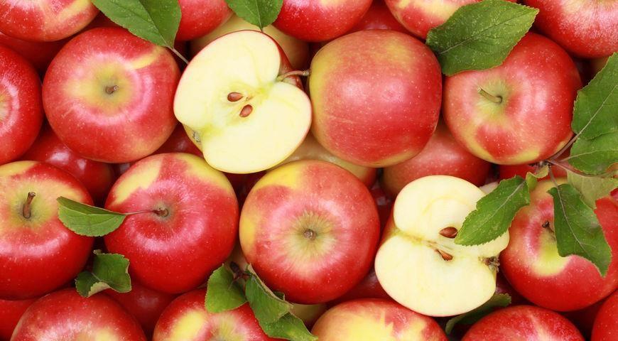 В Чернобыле заметили животное, которое любит поедать яблоки: отдыхало в лесу на солнце