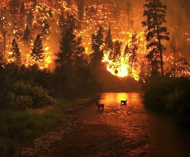 """""""Все в огне, мы в окружении"""", - СМИ сообщают про катастрофу с пожарами в Якутии, помощь отправили не туда"""