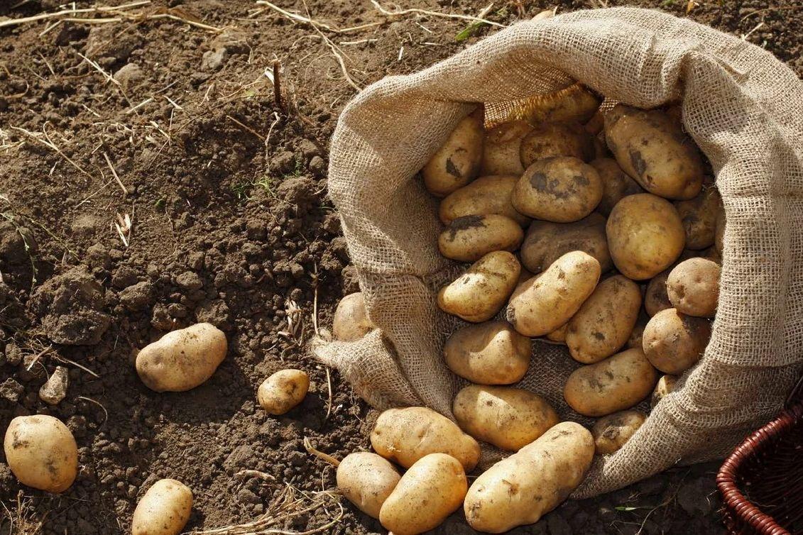 """Россиян """"бомбят"""" картошкой: кадры, как селу в Якутии самолет """"десантирует"""" овощи"""