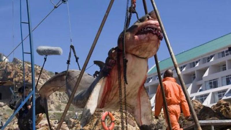 Шокирующее фото: в Пакистане показали пойманную легендарную акулу мегалодон, считавшуюся вымершей миллионы лет назад во времена плейстоценового периода
