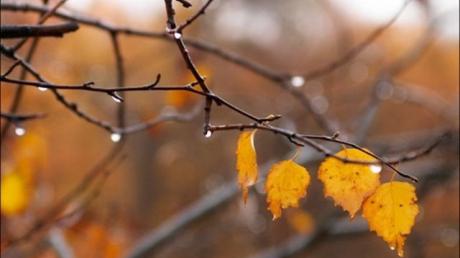 Украину накроет резкое похолодание: синоптик Горбань дал прогноз до конца сентября