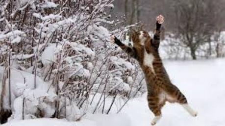 Зима возвращается: на выходных Украину ожидают снегопады и резкое похолодание