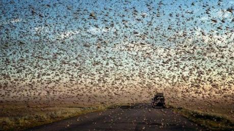 """Россию и Казахстан настигла """"египетская казнь"""" - гигантские стаи саранчи: появились шокирующие кадры, наводящие ужас"""