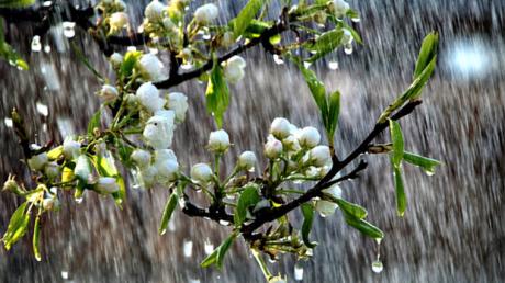 В Украину нагрянут грозы и ливни, стихия охватит многие регионы – прогноз до конца апреля