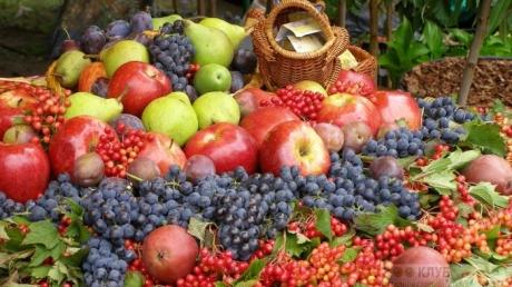 В Европе оценили качество фруктов и ягод от украинских аграриев