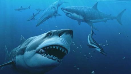 Ученые установили, кто истребил мегалодонов: убийцы гигантских динозавров существуют до сих пор