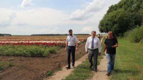 Неземная красота, которую стоит увидеть: в Винницкой области высаживают огромное поле голландских роз – кадры