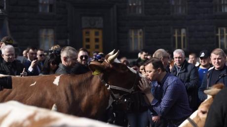"""""""А я их люблю"""": Ляшко поцеловал корову перед зданием Кабмина, рассказав, чего боится правительство"""