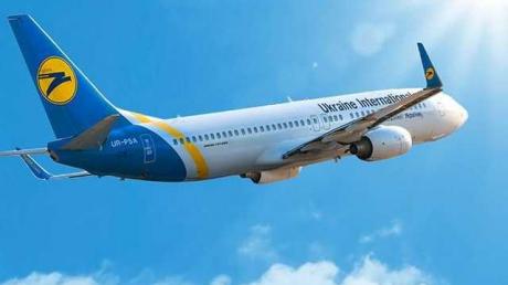 Смертельный рейс МАУ: из-за гибели 38 щенков на борту самолета авиакомпании запрещена перевозка животных