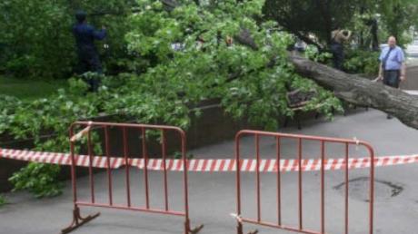 Первые жертвы бушующей в Одессе стихии: упавшее дерево убило пенсионерку и раздавило автобус с людьми (кадры)