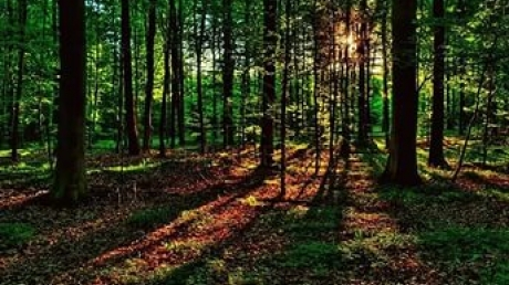 суицид, пропажа, лес, мужчина, находка