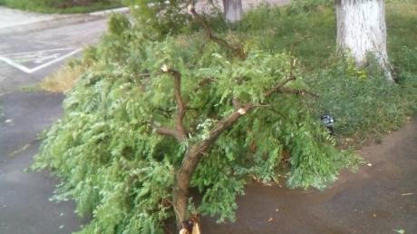 Град размером с фасоль и адский ветер: в Мариуполе после непогоды более ста обесточенных подстанций и десятки рухнувших деревьев - кадры