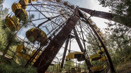 Чернобыль, зона отчуждения, рыжий лес, радиация, облучение, смерть, мутации, происшествия