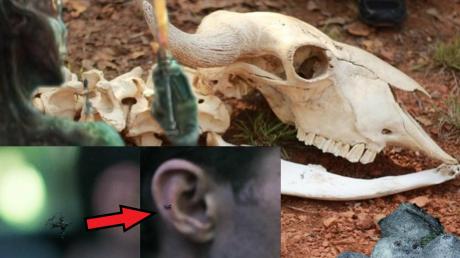 Под Омском нашли могильник подопытных рептилоидов, который станет мощным бактериологическим оружием