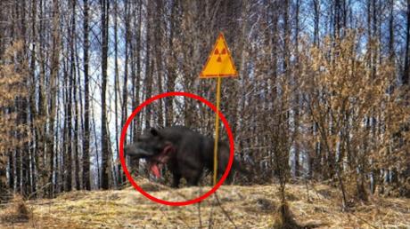 Чернобыль, аномалия, происшествия,феномен, мутанты-кровососы, нападения, инцидент, радиация