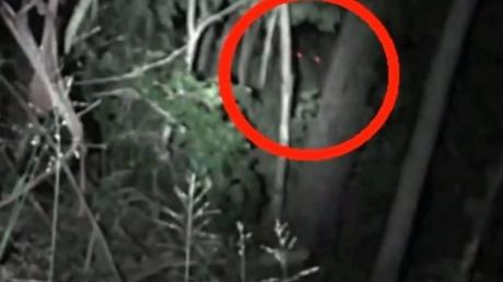 Гигантское существо с ярко-красными глазами: кадры монстра из Австралии напугали местных жителей
