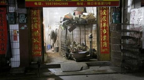 новости, Китай, собаки, животные, жестокость, бойня, холера, бешенство
