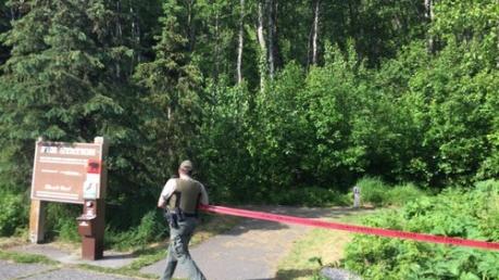 На Аляске медведь убил 16-летнего бегуна во время массового забега