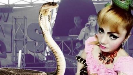 Королевская кобра напала на индонезийскую певицу на сцене: Ирма Бьюл не выжила